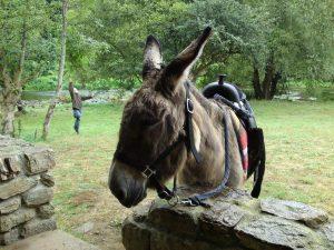 âne Asinerie de Kergall alentours camping morbihan